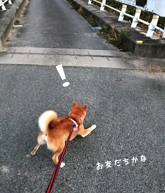 f:id:shibainumugi:20201202130339j:image