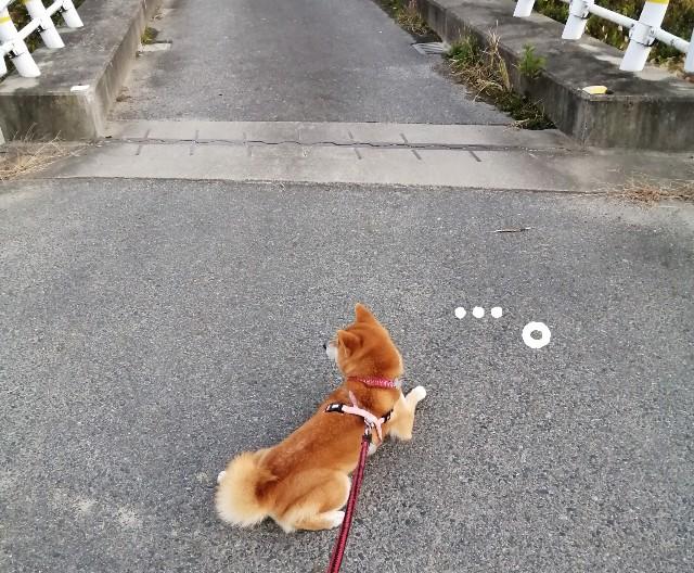 f:id:shibainumugi:20201202130351j:image