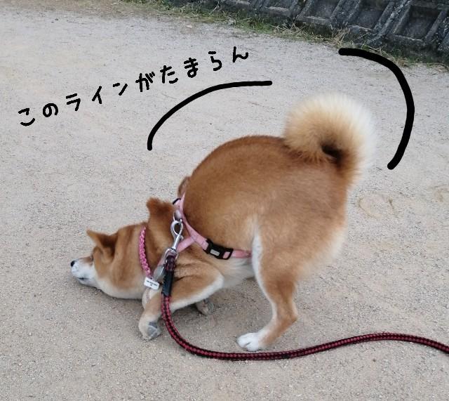 f:id:shibainumugi:20201212205139j:image