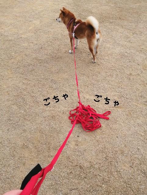 f:id:shibainumugi:20201216081354j:image