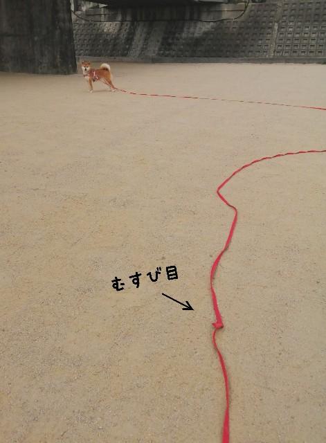 f:id:shibainumugi:20201216081410j:image