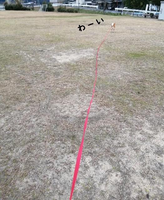 f:id:shibainumugi:20201216081455j:image