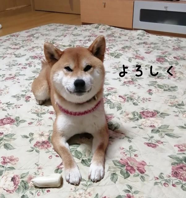 f:id:shibainumugi:20201230204934j:image