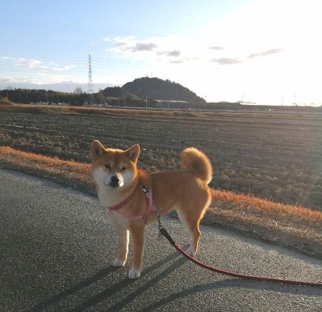 f:id:shibainumugi:20210102101513j:image