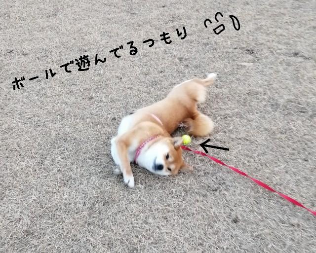 f:id:shibainumugi:20210107202609j:image