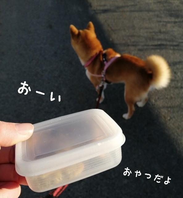 f:id:shibainumugi:20210109195408j:image