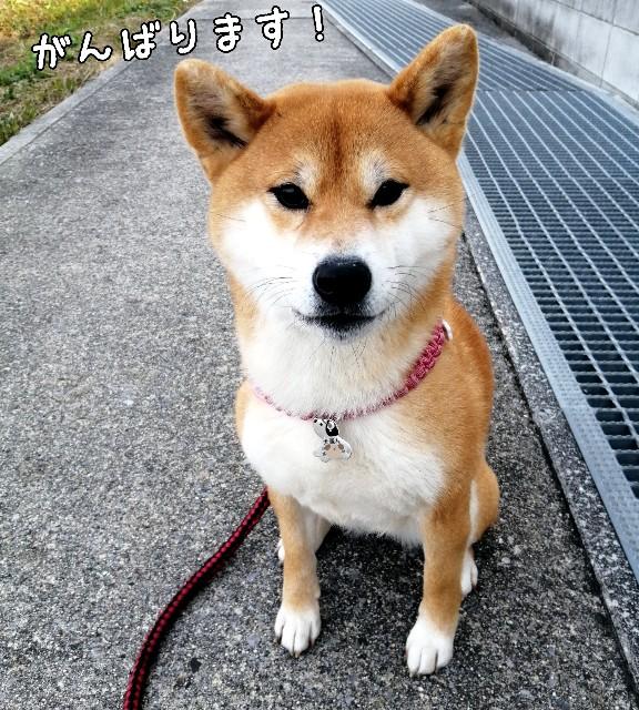 f:id:shibainumugi:20210116101804j:image