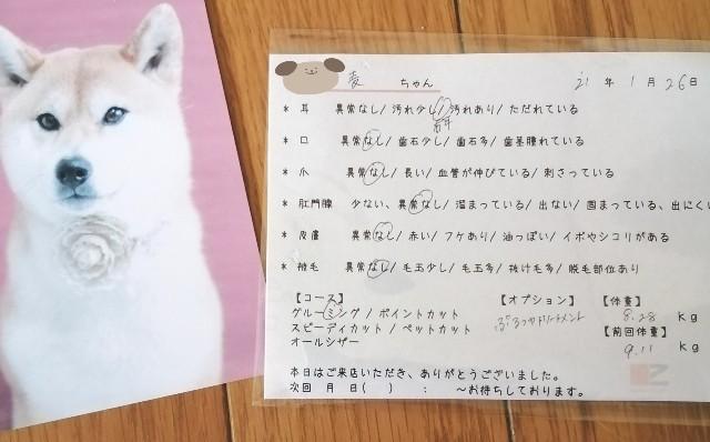 f:id:shibainumugi:20210127174726j:image