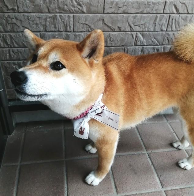 f:id:shibainumugi:20210127175614j:image