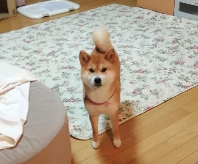 f:id:shibainumugi:20210214162911j:image