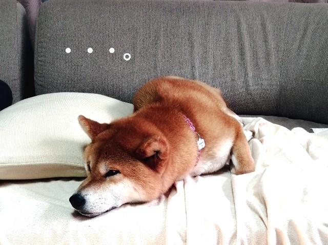 f:id:shibainumugi:20210215153722j:image