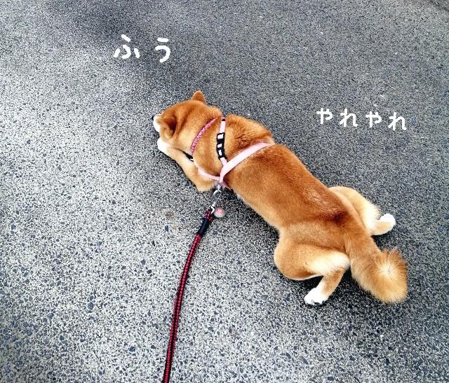f:id:shibainumugi:20210215153817j:image