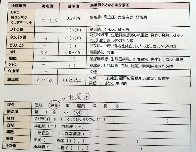 f:id:shibainumugi:20210219123200j:image