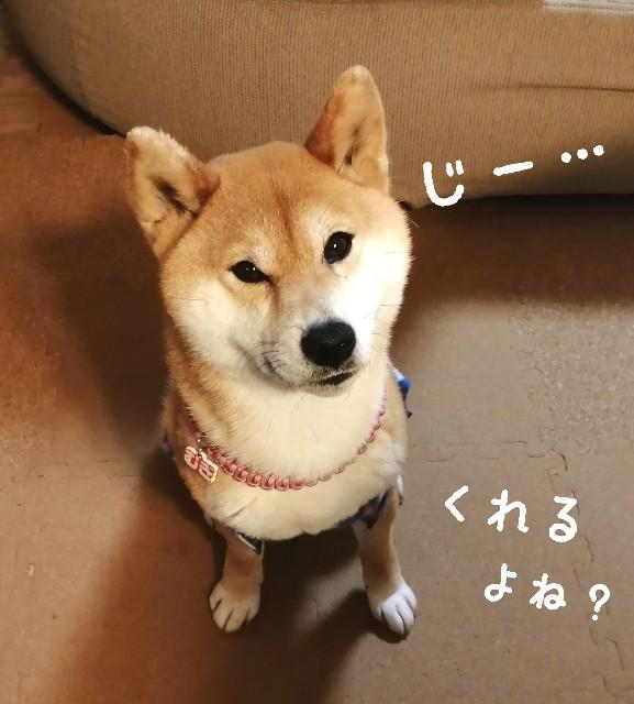 f:id:shibainumugi:20210305123657j:image