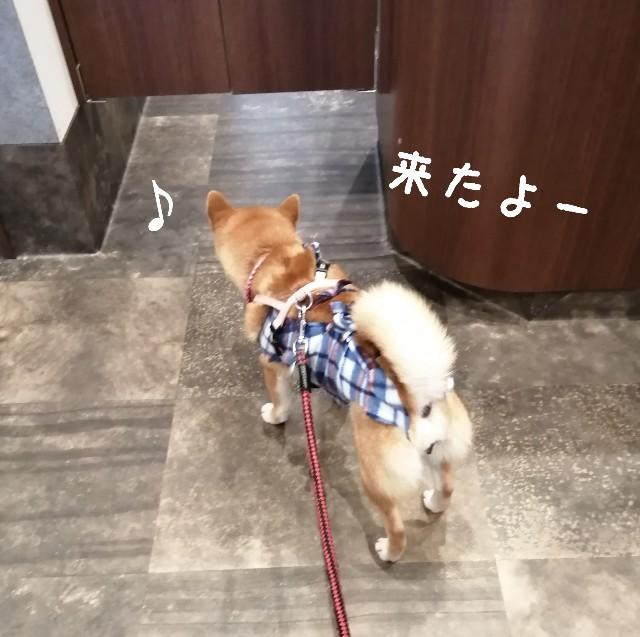 f:id:shibainumugi:20210316091652j:image