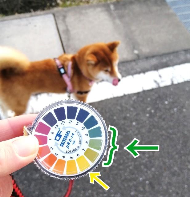 f:id:shibainumugi:20210326131534j:image