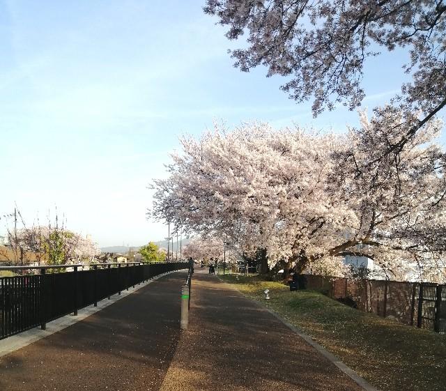 f:id:shibainumugi:20210401114655j:image