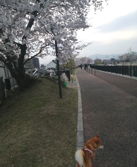 f:id:shibainumugi:20210401114710j:image
