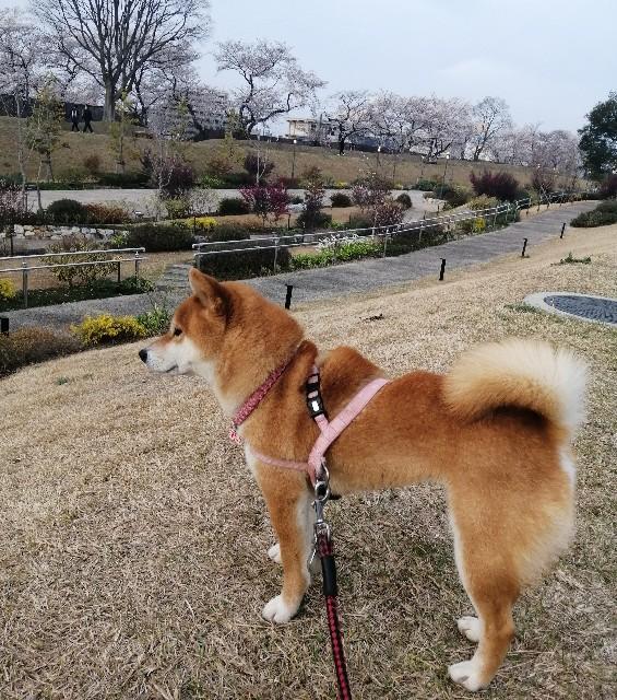 f:id:shibainumugi:20210401115626j:image