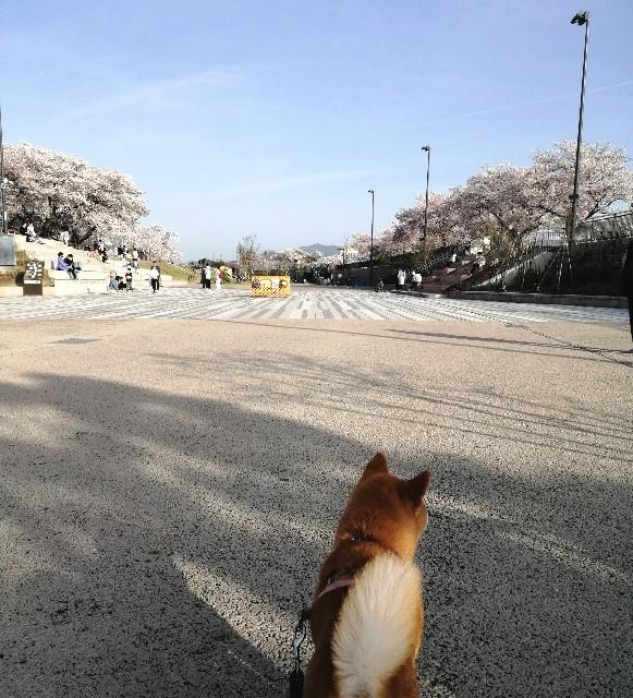 f:id:shibainumugi:20210401115655j:image