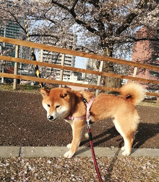 f:id:shibainumugi:20210401115744j:image