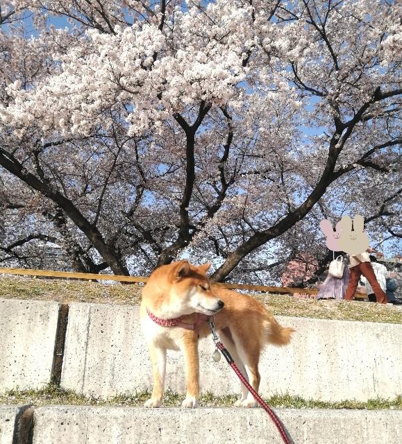 f:id:shibainumugi:20210401120223j:image