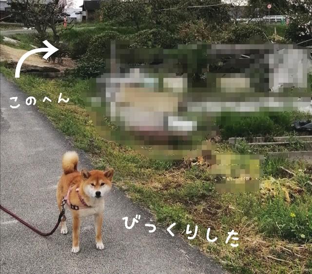 f:id:shibainumugi:20210406093432j:image