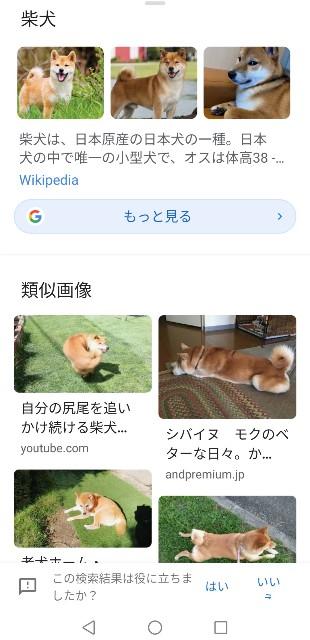 f:id:shibainumugi:20210411104603j:image
