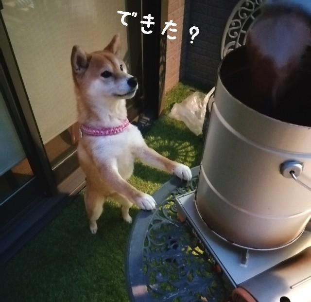 f:id:shibainumugi:20210413081942j:image