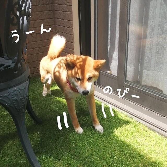 f:id:shibainumugi:20210415170028j:image