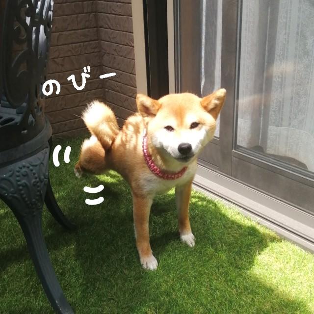 f:id:shibainumugi:20210415170036j:image