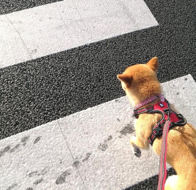 f:id:shibainumugi:20210426210609j:image