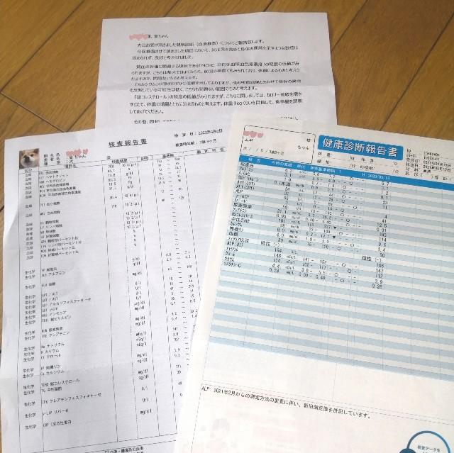 f:id:shibainumugi:20210428185934j:image