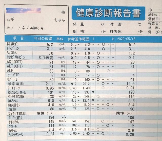 f:id:shibainumugi:20210428203025j:image