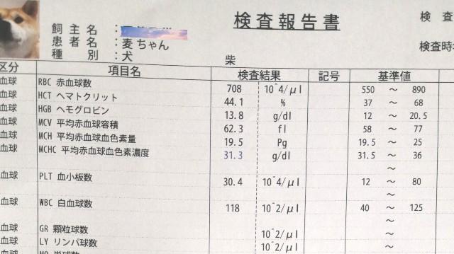 f:id:shibainumugi:20210428204752j:image