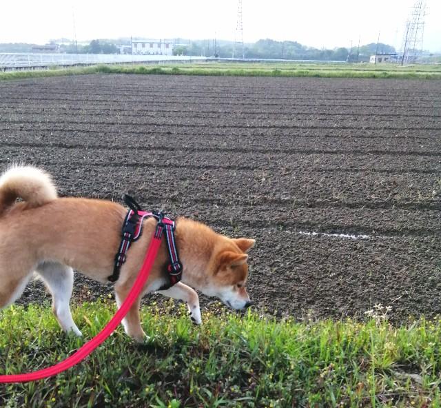 f:id:shibainumugi:20210430175536j:image