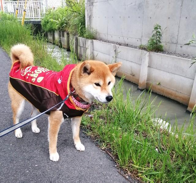 f:id:shibainumugi:20210505085019j:image