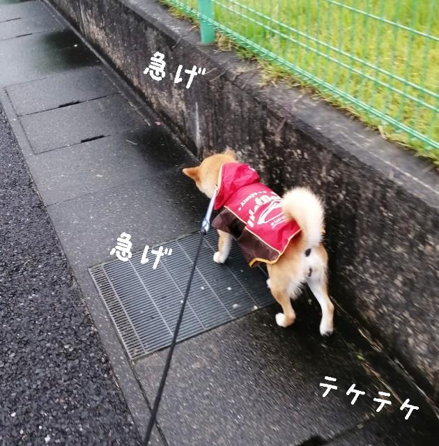 f:id:shibainumugi:20210505090800j:image