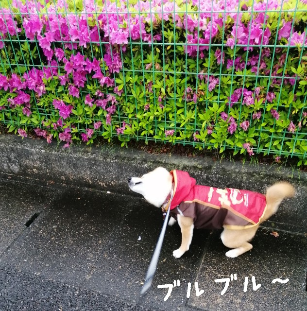 f:id:shibainumugi:20210505090810j:image