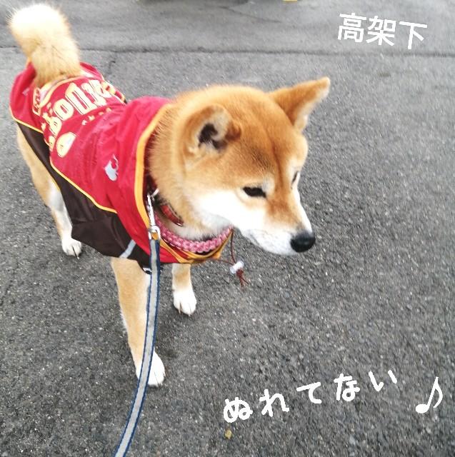 f:id:shibainumugi:20210505090818j:image