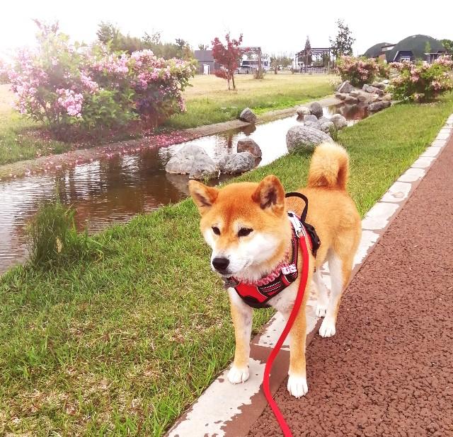 f:id:shibainumugi:20210513154633j:image