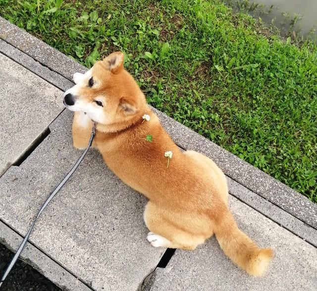 f:id:shibainumugi:20210521123548j:image