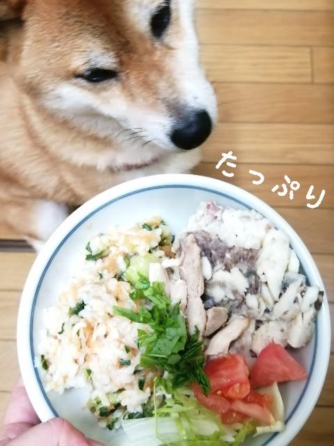 f:id:shibainumugi:20210529110622j:image