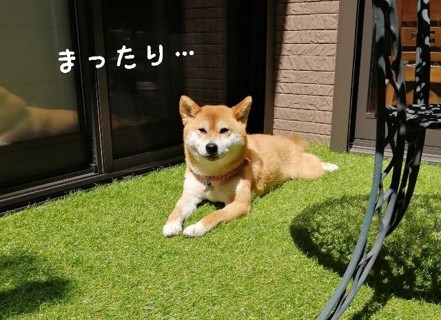 f:id:shibainumugi:20210529110632j:image