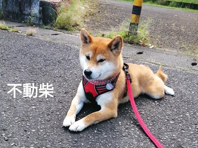 f:id:shibainumugi:20210529110656j:image