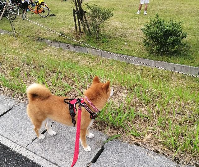 f:id:shibainumugi:20210608094333j:image