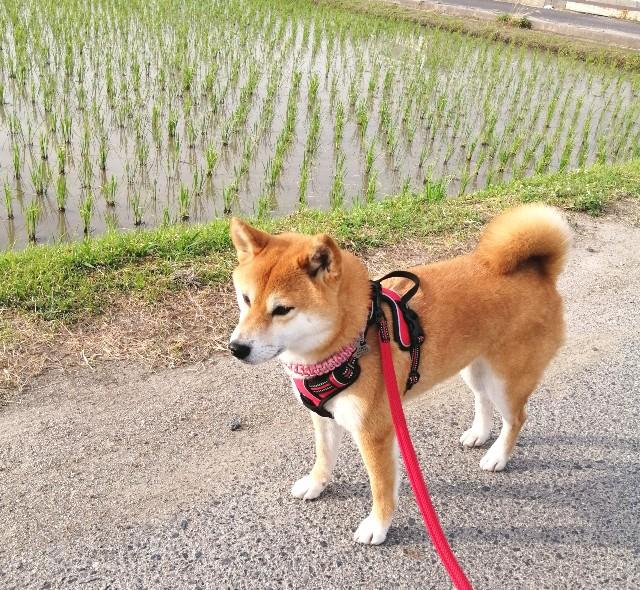 f:id:shibainumugi:20210611095441j:image
