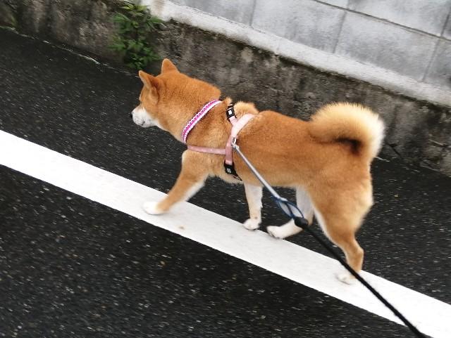 f:id:shibainumugi:20210616112454j:image