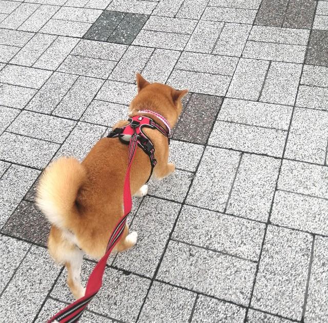 f:id:shibainumugi:20210706220743j:image