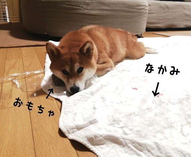 f:id:shibainumugi:20210708110123j:image